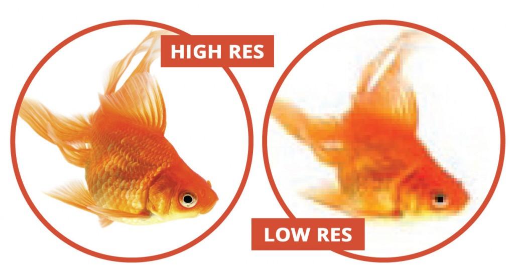 Goldfish_HighRes_LowRes