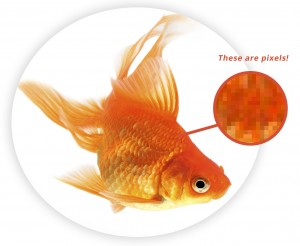 Goldfish_TheseArePixels